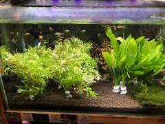 水草水槽3